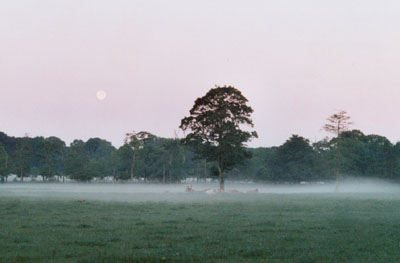 Shallow mist across the old cricket field at Gadlys 04 GMT on 17 July 2000. Photo: © D. Perkins