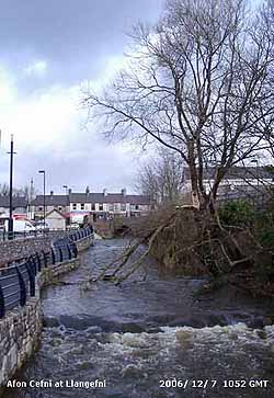 The Afon Cefni with gale-damaged willow tree.