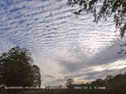 Altocumulus clouds with orographic waves and lenticular altocumulus near horizon.