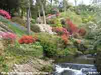 Tranquil River Hiraethlyn and flowering rhodendrons.