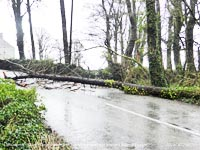Storm Ciara closes Llansadwrn road with fallen tree and BT cable.